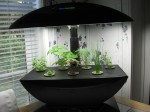 AeroGarden after three weeks